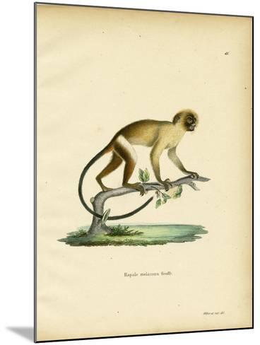 Black-Tailed Marmoset--Mounted Giclee Print