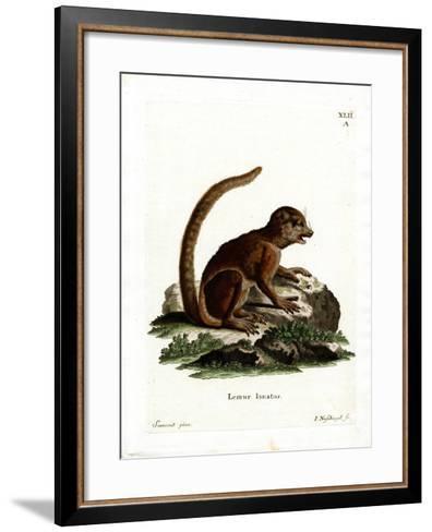Eastern Woolly Lemur--Framed Art Print