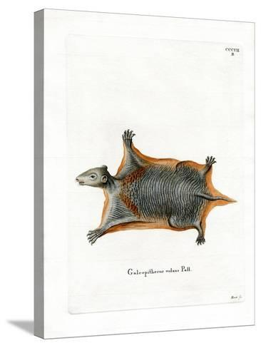 Malayan Flying Lemur--Stretched Canvas Print