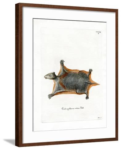 Malayan Flying Lemur--Framed Art Print