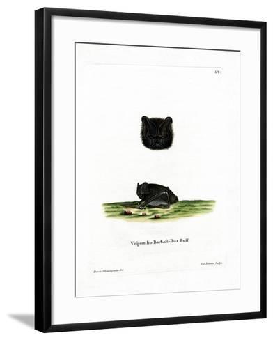 Western Barbastelle--Framed Art Print