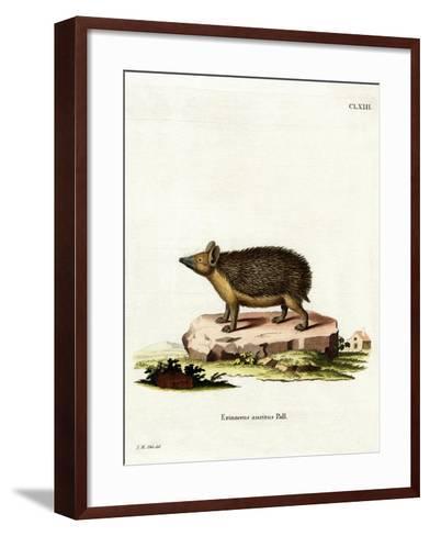 Long-Eared Hedgehog--Framed Art Print