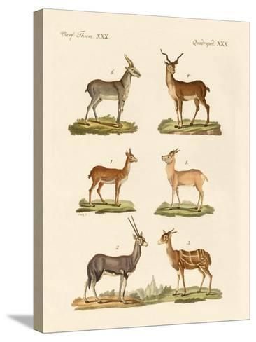 Antelopes and Gazelles--Stretched Canvas Print