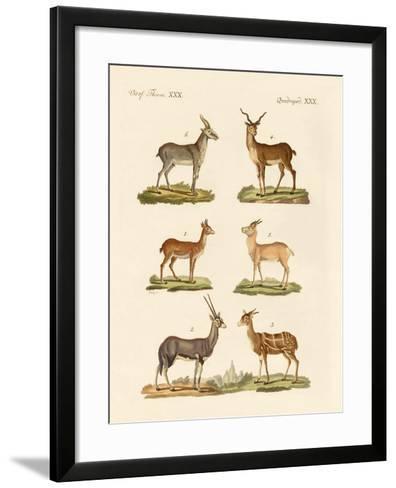 Antelopes and Gazelles--Framed Art Print