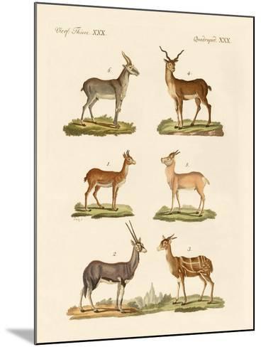 Antelopes and Gazelles--Mounted Giclee Print