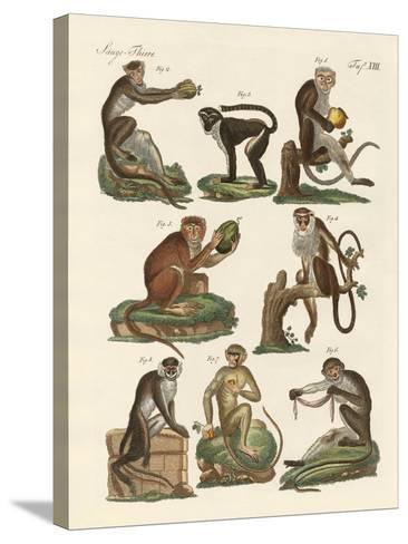 Eight Kinds of Guenon--Stretched Canvas Print