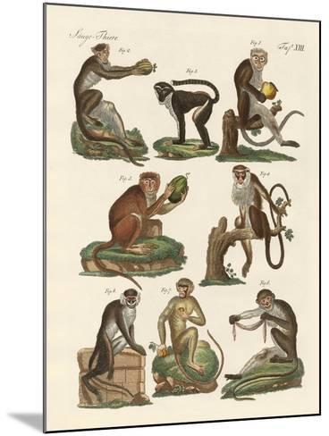 Eight Kinds of Guenon--Mounted Giclee Print