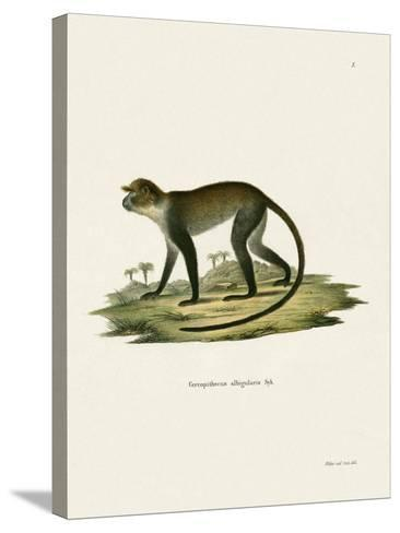 White-Throated Monkey--Stretched Canvas Print