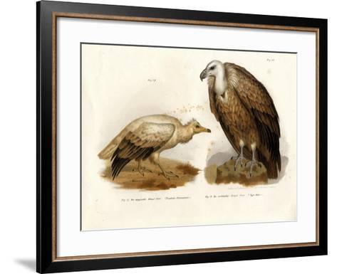 Egyptian Vulture, 1864--Framed Art Print