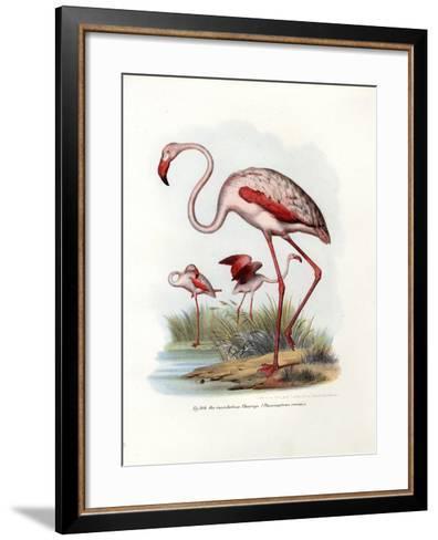 Greater Flamingo, 1864--Framed Art Print