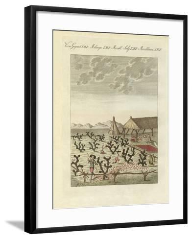 Collecting Cochenilles--Framed Art Print