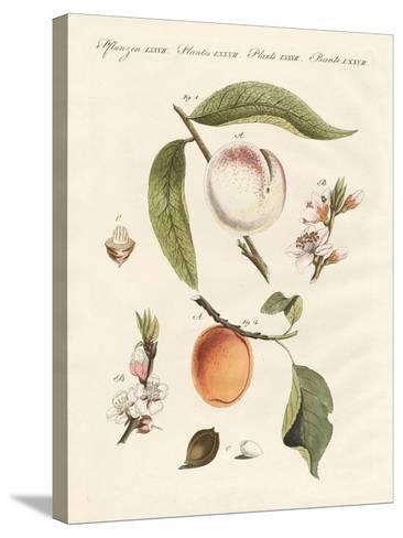 Peaches and Apricots--Stretched Canvas Print