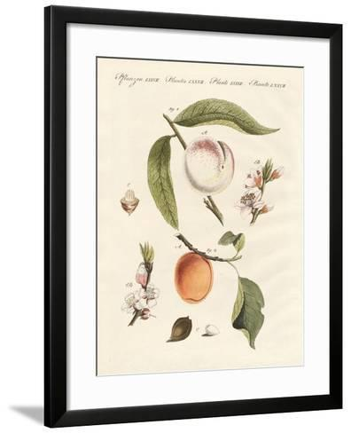 Peaches and Apricots--Framed Art Print