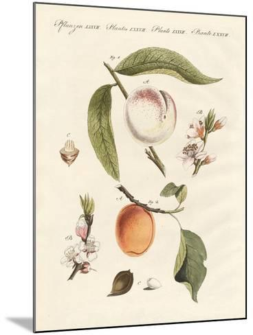Peaches and Apricots--Mounted Giclee Print