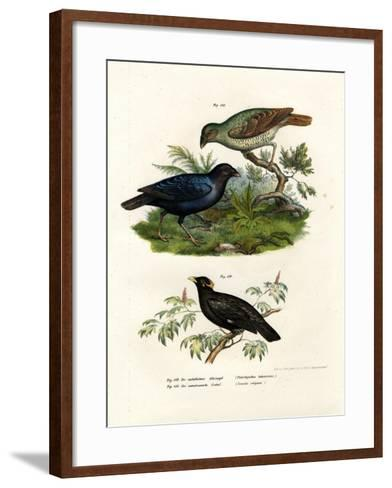 Satin Bower Bird, 1864--Framed Art Print