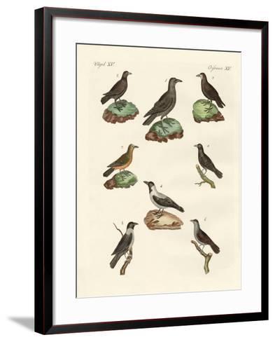 Ravens, Crows and Daws--Framed Art Print