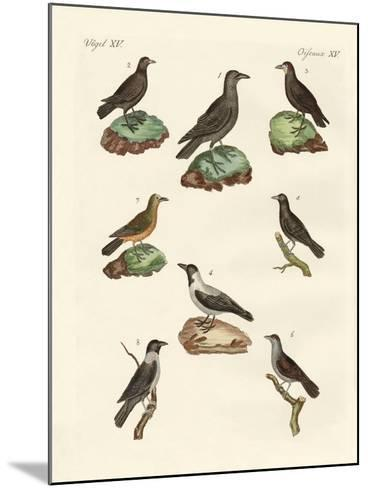 Ravens, Crows and Daws--Mounted Giclee Print