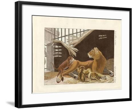 The Lioness and Her Cubs--Framed Art Print