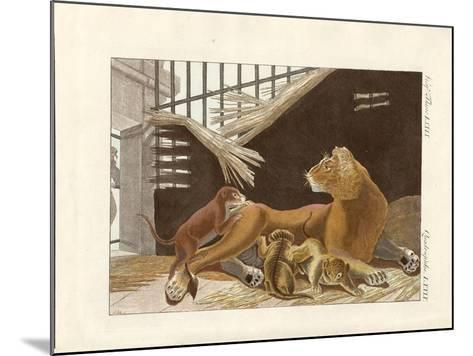 The Lioness and Her Cubs--Mounted Giclee Print