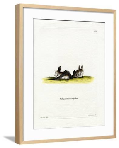 Hairy Slit-Faced Bat--Framed Art Print