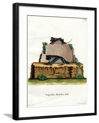 Pallas's Mastiff Bat--Framed Art Print
