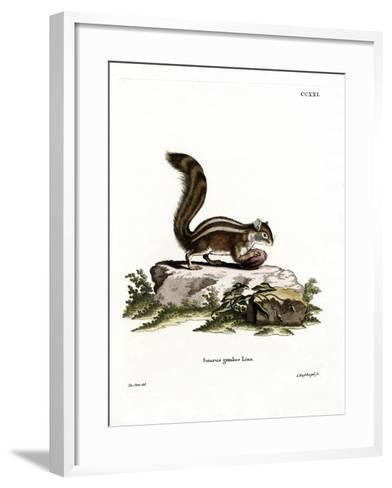 Barbary Ground Squirrel--Framed Art Print