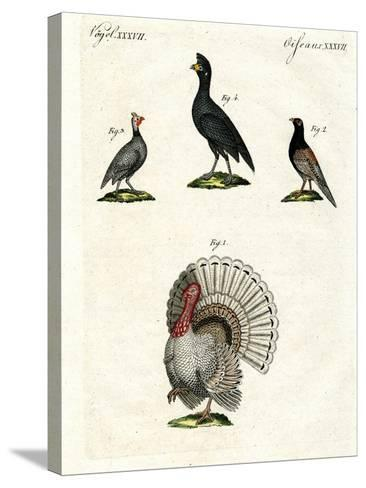 Foreign Domestic Poultry--Stretched Canvas Print