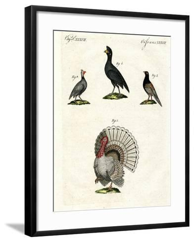 Foreign Domestic Poultry--Framed Art Print