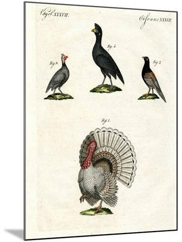 Foreign Domestic Poultry--Mounted Giclee Print