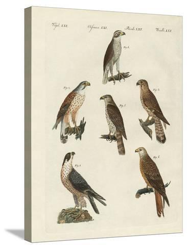 German Birds of Prey--Stretched Canvas Print