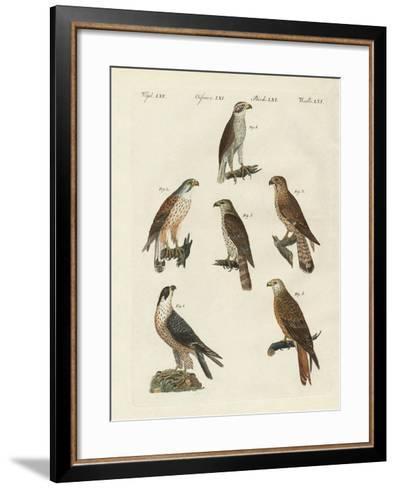 German Birds of Prey--Framed Art Print