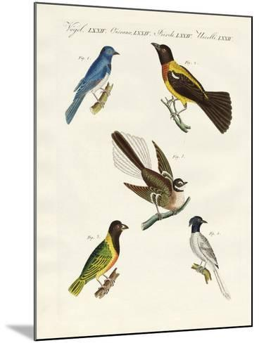 Beautiful Foreign Birds--Mounted Giclee Print