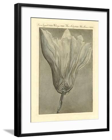 Strange Fossilizations--Framed Art Print