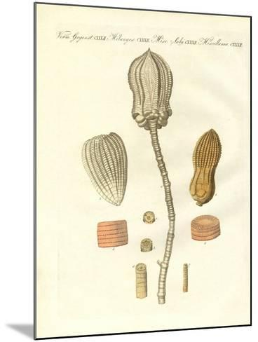 Strange Fossilizations--Mounted Giclee Print