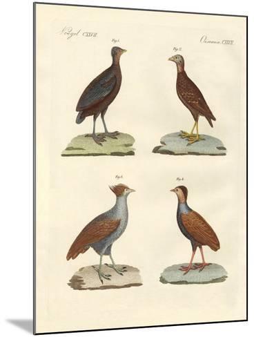 Strange Hen-Like Birks--Mounted Giclee Print
