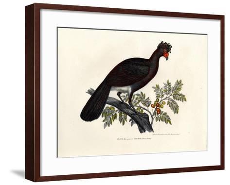 Black Curassow, 1864--Framed Art Print