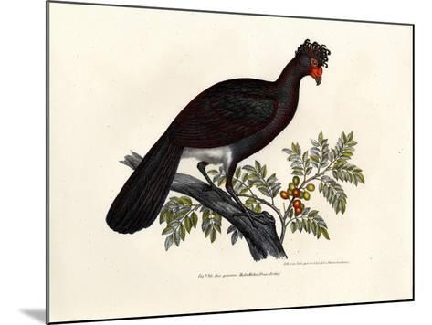 Black Curassow, 1864--Mounted Giclee Print