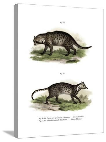 African Civet, 1860--Stretched Canvas Print