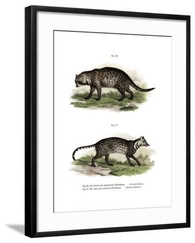 African Civet, 1860--Framed Art Print