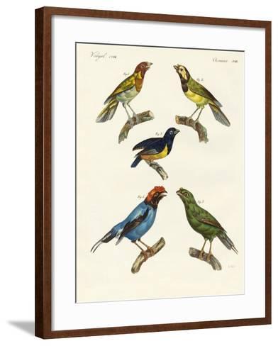 Beautiful Foreign Birds--Framed Art Print