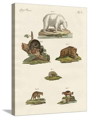Various Kinds of Bears--Stretched Canvas Print