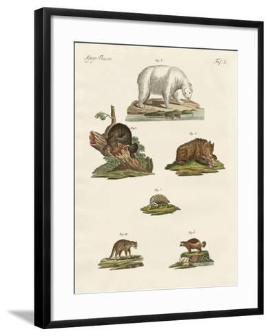 Various Kinds of Bears--Framed Art Print
