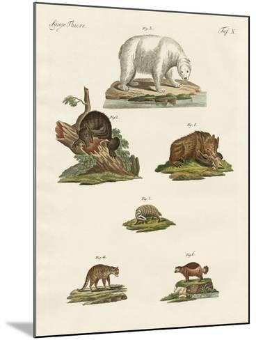 Various Kinds of Bears--Mounted Giclee Print