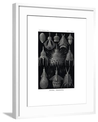 Cyrtoidea, 1899-1904--Framed Art Print