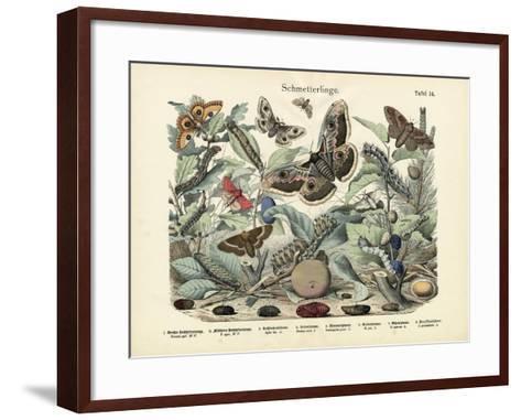 Butterflies, C.1860--Framed Art Print