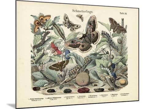 Butterflies, C.1860--Mounted Giclee Print
