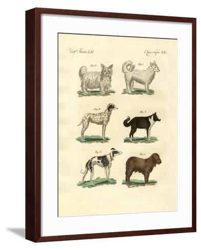 Different Kinds of Dogs--Framed Art Print