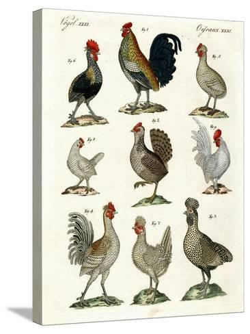 Different Kinds of Hens--Stretched Canvas Print
