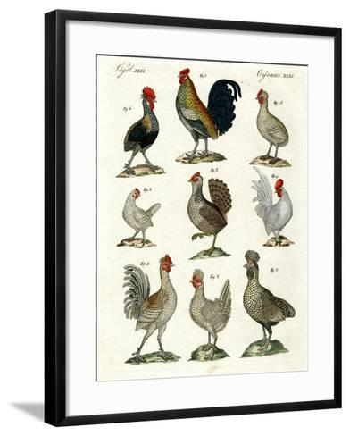 Different Kinds of Hens--Framed Art Print
