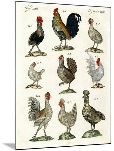 Different Kinds of Hens--Mounted Giclee Print